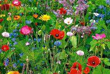 Wildflowers / by Frans Hermans