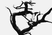 Arbres / Nature, arbres, fôrets, branches, racines, sous-bois, canopée...