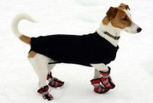 Winter Dog Boots / Winter can be a real challenge for dogs! Take a look at our awesome collection of the best winter snow dog boots for small and medium sized breeds you'll find! Simply head over to www.dogtrendy.com !