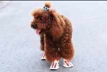 Casual Dog Shoes / Take a look at our awesome collection of the best everyday shoes for dogs! We have the cutest dog shoes for small and medium sized breeds you'll find! Simply head over to www.dogbootsworld.com !