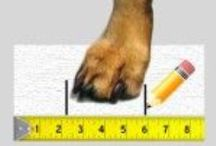 Measure Dog for Shoes / Whatever the reason for your new-found gift, you want to be sure they will fit nicely on your dog's feet! It is quite simple to measure your dog's paws for shoes; let me tell you how!