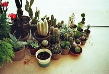 Interiores verdes + domesticidades