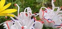 my work - flowers made of plastic bottles / flowers made of recycled plastic bottles/ květinové šperky z PET lahví/ by Catena- Czech