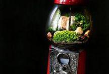 Terrarium / Inspiration terrarium