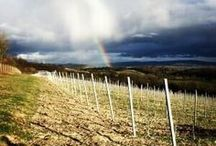 The English Wine Rainbow / Whenever we spot a rainbow over an English Vineyard it ends up here.  Also on Twitter #englishwinerainbow
