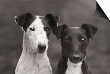 All Smooth Fox Terriers International / Calling All Smooth Fox Terrier Aficionados. A site to share all about our smart and silly breed.
