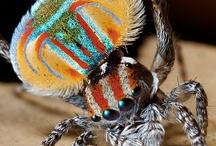 Bugs & Stuff