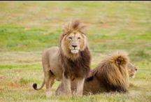 África / Wild animals