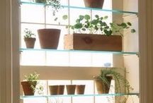 Indoor Gardening / Indoor plant tips and ideas -  #indoor_plants #plantcare #tropicals #indoor_gardening