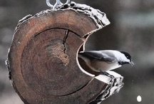 Birds / by Cheri Connell
