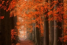 Autumn  / by Cheri Connell