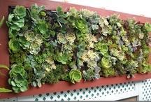 Vertical Gardens / vertical garden design inpiration - vertical garden products - tips and advice on building and planting a vertical garden #verticalgardening