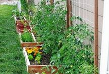 Raised Bed Gardens / raised bed vegetable gardens- raised bed flower gardens - raised bed garden layouts & plans #raised_bed_garden