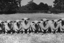 Rural Photos / Photos from our archives showing the people, architecture and landscapes of the English countryside.