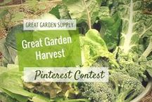"""Contest 