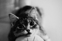 cute and cats