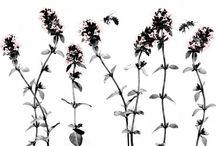 hcompany bees and botanics