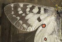 Vleugels - Wings
