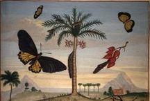 Joris Hoefnagel en vrienden - Anna Maria Sibylla Merian 1647-1717 / Joris Hoefnagel of George Hoefnagel (Antwerpen, 1542 - Wenen, 24 juli 1601), schilder en prentkunstenaar, Zuidelijke Nederlanden.