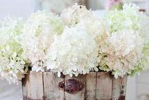 Beautiful Gardens & Flowers