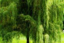 Nature / Doğa'nın sesi...