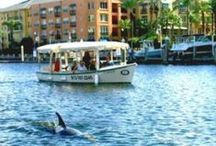 Tampa, FL / Things to do in and around Tampa, Florida.