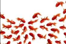 my goldfish work and photo