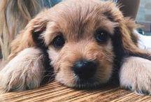 People loves pets / Το People Greece λατρεύει τα κατοικίδια και σας φέρνει τις πιο cute εικόνες