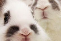 Bunnies, rabbits, & hares / All things bunny