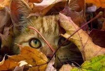 Cats in Fall / Beauty of cats, beauty of autumn ...