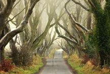 Wenn in Irland...