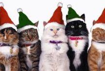 Decoração p Natal