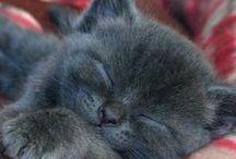 Soft Kitty Warm Kitty / Fur Babies / by Arleen Radebaugh