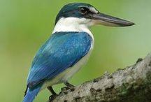 kleurrijke vogeltjes / vogels