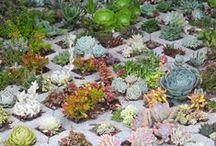 verde, vida, plantas