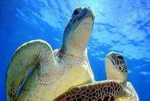 Turtles ...♡♡♡