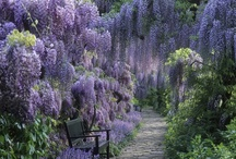 Outdoors / gorgeous places, beautiful spaces - I love them all / by Anne King