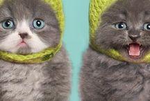 Pets ♡ / Soooo Cute!