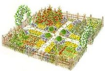 Great Gardening / Gardening and garden info. / by Marilyn Warren