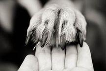 Animals I Love :D / just pure cuteness