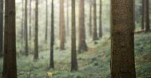 Kirja: Metsä