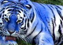 Animal sweetness / doçura animal