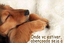 Boa Noite / ...