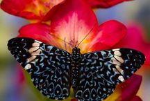 butterflies ~•●Ƹ̵̡Ӝ̵̨̄Ʒ●•~