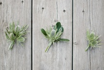 Flowers to Wear - Boutonnieres / Boutonnieres/Buttonholes