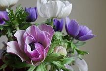 flowers and plants / A collections of beautiful flowers and plants for the garden nad forthe home.