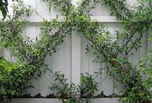garden / Insipring ideas for your garden. What to plants, and how to plant it. Gorgeous garden structures.