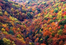 Autumn Splendor / by Pamela Clark