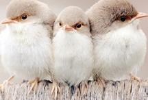 Birds-vogels
