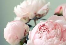 Flowers, flowers, beautiful flowers-prachtige bloemen